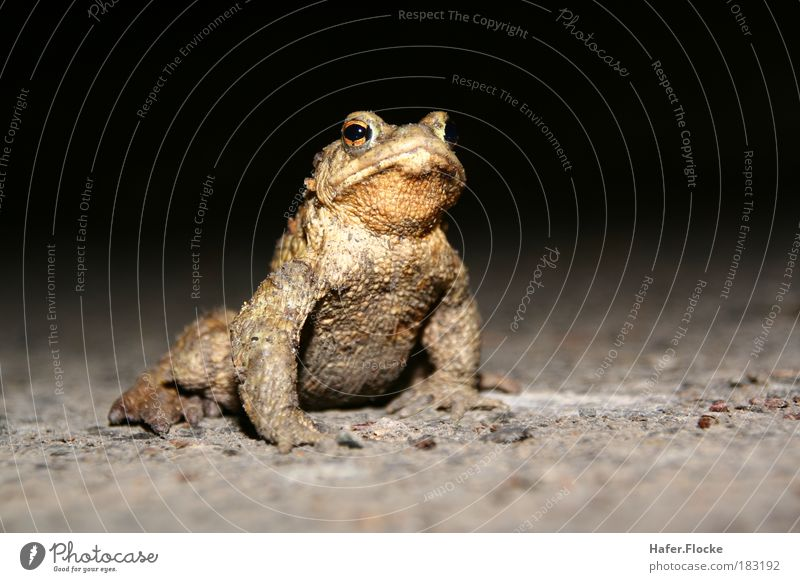 Nature Water Calm Animal Jump Brown Earth Skin Wait Esthetic Stand Science & Research Frog Pond Disgust Gardening