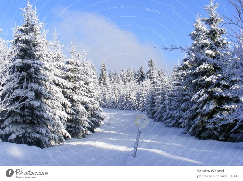 magic forest Colour photo Exterior shot Deserted Copy Space top Day Vacation & Travel Winter Snow Winter vacation Mountain Hiking Environment Nature Landscape