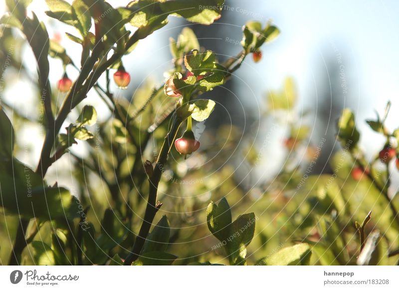 bell ring Colour photo Close-up Day Sunlight Plant Leaf Hang Fresh Nature Feeble Fruit