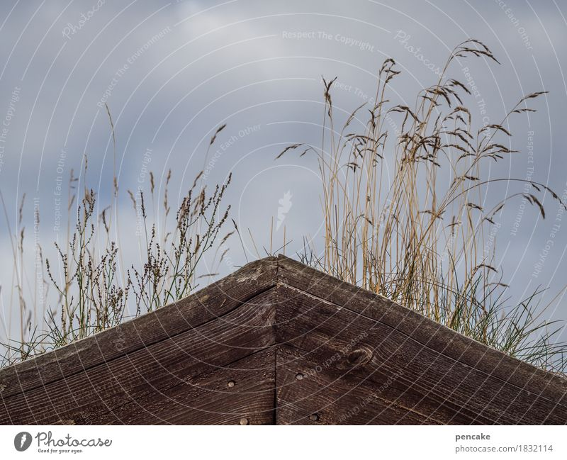Great climate | roof garden Nature Elements Sky Climate Weather Hut Good Wooden hut Roof garden Grass Clouds Damp Wetlands Grass roof Green Biological