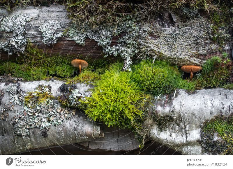 Nature Plant Autumn Natural Growth Roof Hut Society Moss Mushroom Norway Lichen Eaves Symbiosis Birch bark