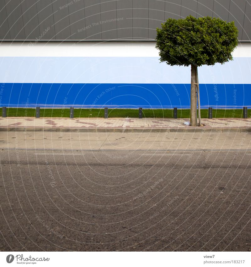 EINBAUM Colour photo Multicoloured Exterior shot Detail Deserted Copy Space bottom Deep depth of field Nature Plant Tree Grass House (Residential Structure)