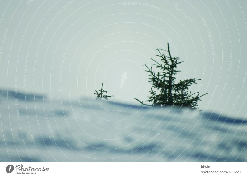 Sky Nature Blue Winter Environment Landscape Mountain Snow Air Horizon Ice Weather Tree Frost Hill Fir tree