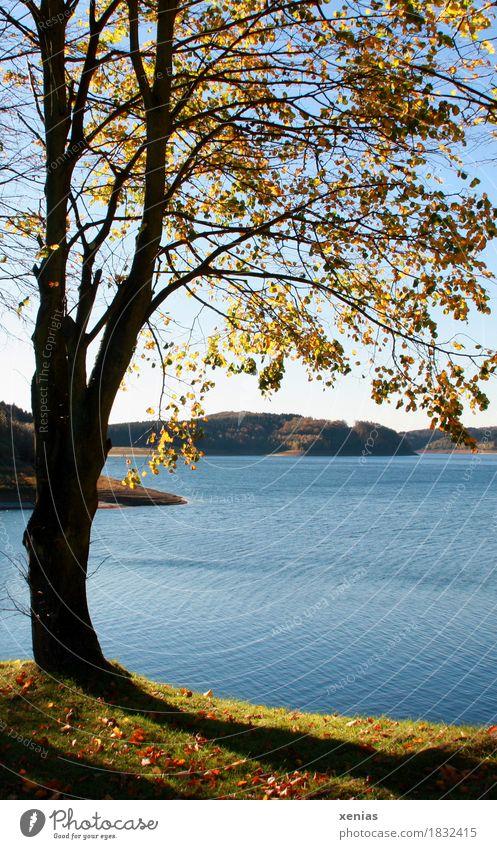 Blue Green Water Tree Landscape Yellow Autumn Lake Hiking Autumnal colours Reservoir Mountainous area
