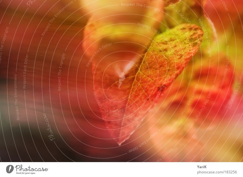 Nature Beautiful Red Plant Leaf Calm Meadow Warmth Autumn Emotions Movement Grass Air Dream Moody Wind