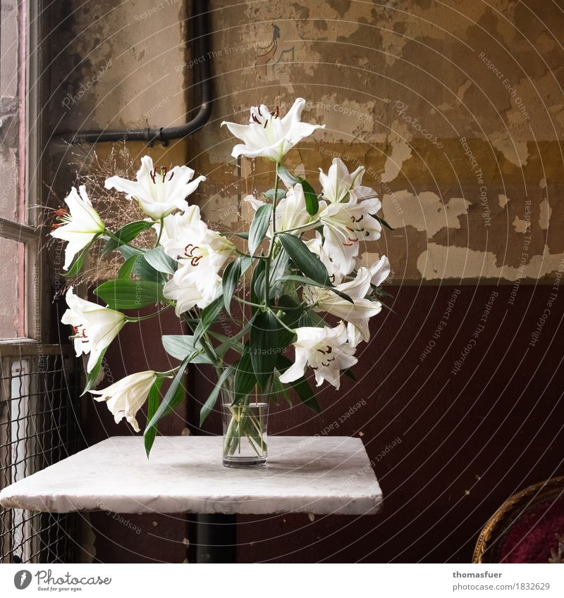 lilies, vase, old wall Interior design Decoration Table Room Staircase (Hallway) Funeral service Still Life Plant Flower Blossom Lily Architecture