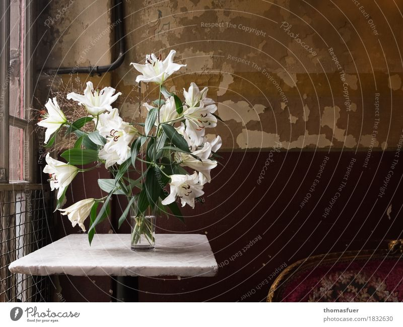 lilies Flat (apartment) Interior design Decoration Sofa Table Wallpaper Room Flower Blossom white lilies Vase Old Original Brown Green White Romance Hope