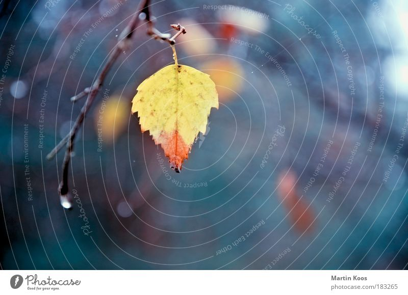 abgesang Nature Leaf Loneliness Colouring Yellow Red Pastel tone Twigs and branches Drop Suspended Transience Autumn Cold Beautiful Individual Multicoloured