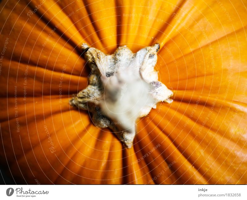 pumpkin Pumpkin Pumpkin time Nutrition Thanksgiving Hallowe'en Autumn Stalk Large Near Orange Vignetting Colour photo Interior shot Close-up Detail
