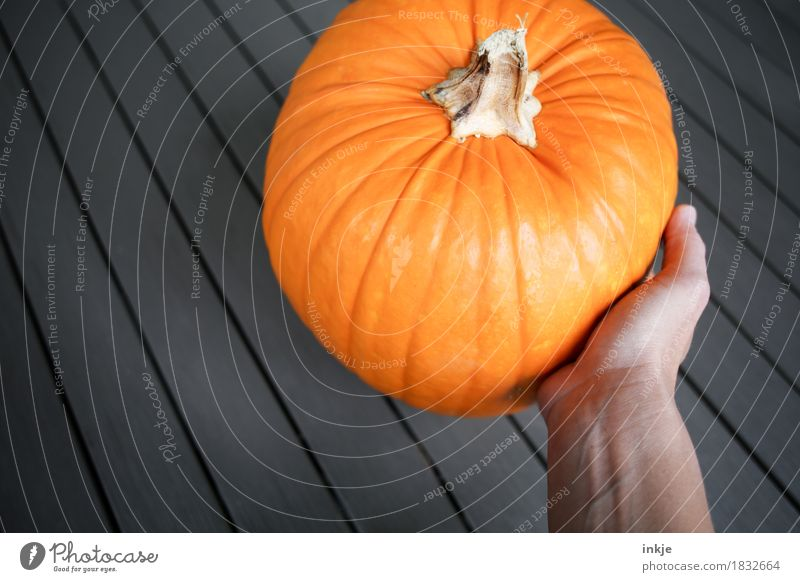 Healthy Eating Hand Autumn Orange Fresh Large Round To hold on Vegetable Harvest Lush Pumpkin Pumpkin time