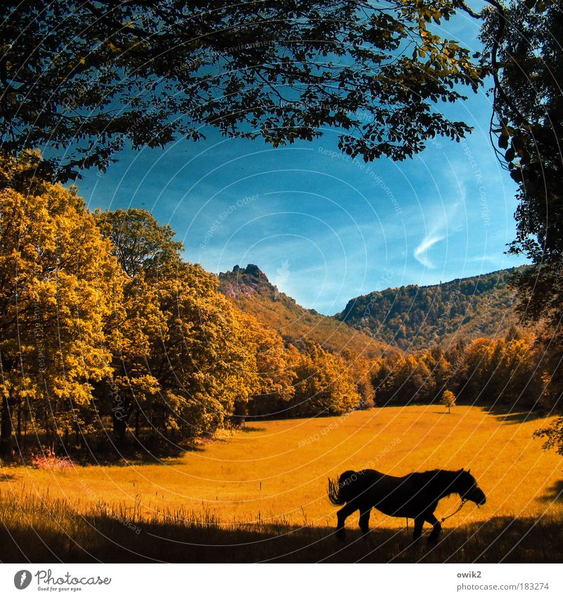 Wandering horse Ride Trip Far-off places Environment Nature Landscape Sky Clouds Horizon Autumn Climate Beautiful weather Tree Grass Bushes Meadow Forest Hill