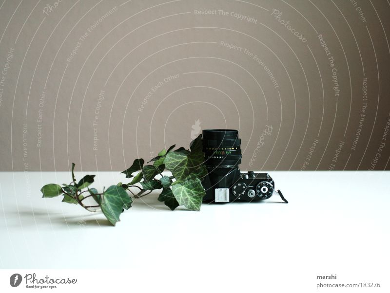 photogenic ivy Colour photo Interior shot Nature Spring Autumn Plant Ivy Leaf Exceptional Green Black Camera Photography Take a photo Photographer Analog Old