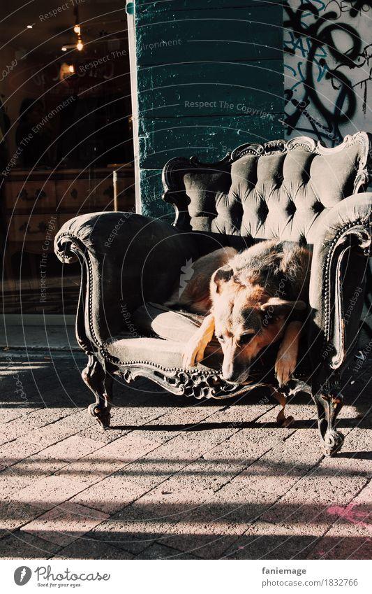 siesta Animal Pet Dog 1 Sleep Armchair Relaxation Siesta Funny Town City life Graffiti Vintage Old Shadow play Exhaustion Break Shepherd dog Sweet Cute Brown