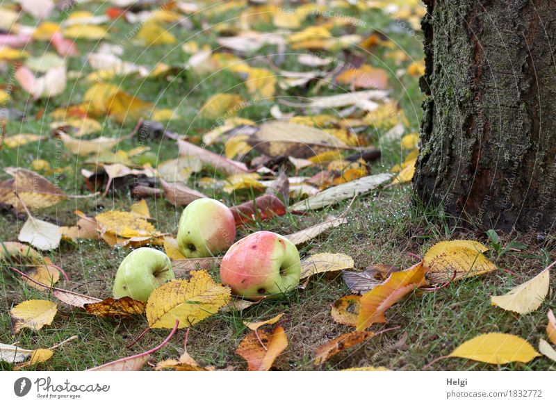 Nature Plant Green Tree Red Environment Yellow Life Autumn Natural Grass Healthy Garden Food Brown Moody