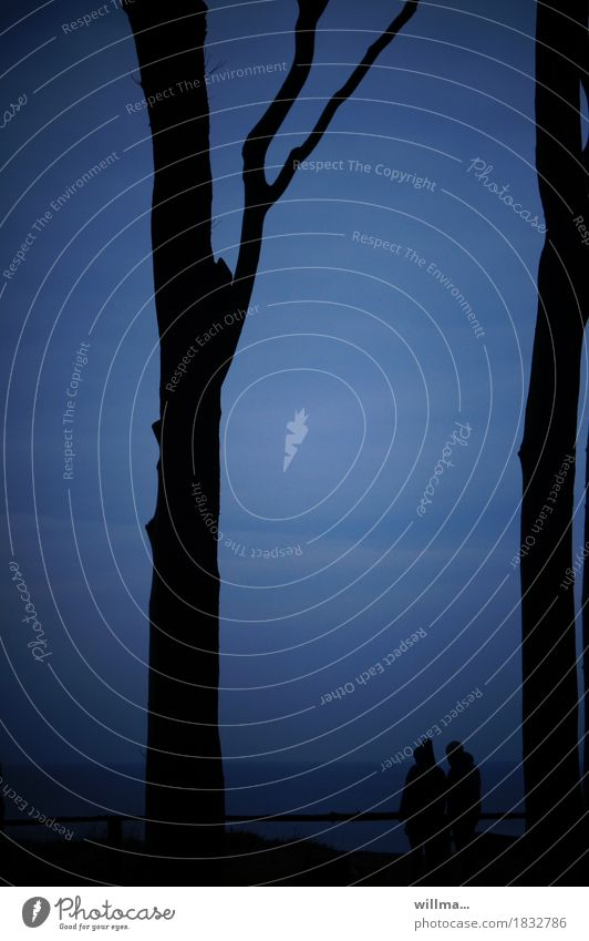 Blue Tree Dark Black Couple Baltic Sea Ghost forest Nienhagen