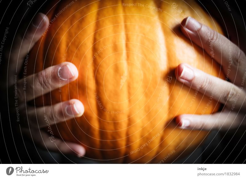 pumpkin Pumpkin Pumpkin time Nutrition Thanksgiving Hallowe'en Child Young woman Youth (Young adults) Infancy Life Hand Fingers 1 Human being To hold on
