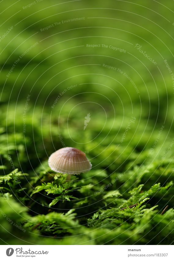 Nature Green Plant Calm Nutrition Autumn Small Park Natural Growth Cute Idyll Organic produce Mushroom Moss Environmental protection