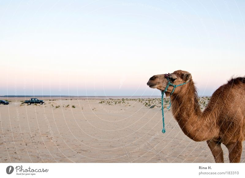 Nature Vacation & Travel Animal Sand Landscape Leisure and hobbies Services Past Competition Endurance