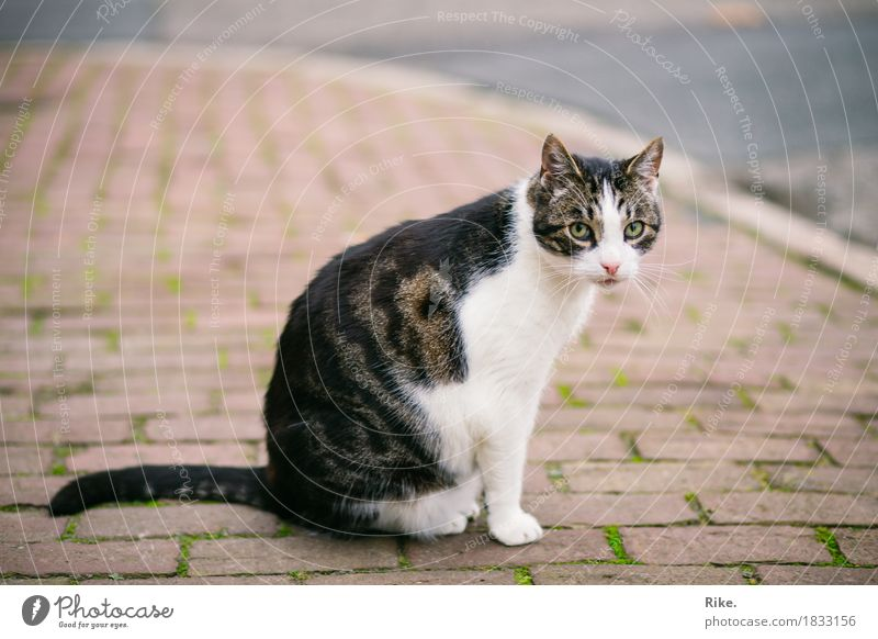 Cat from next door. Street Animal Pet 1 Beautiful Wild Love of animals Nature Timidity Encounter Paving stone Exterior shot Whisker Pelt Cute Paw Tails