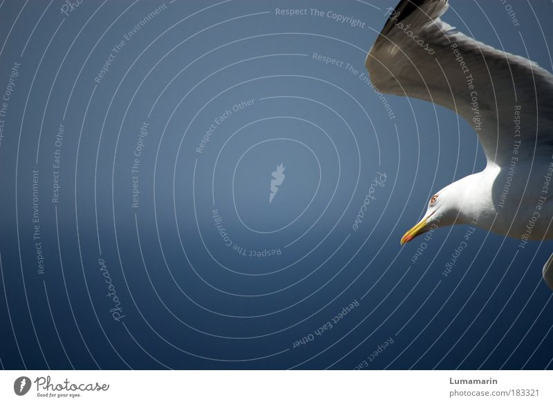 Blue White Beautiful Ocean Summer Vacation & Travel Animal Life Environment Air Moody Horizon Bird Wind Elegant Flying