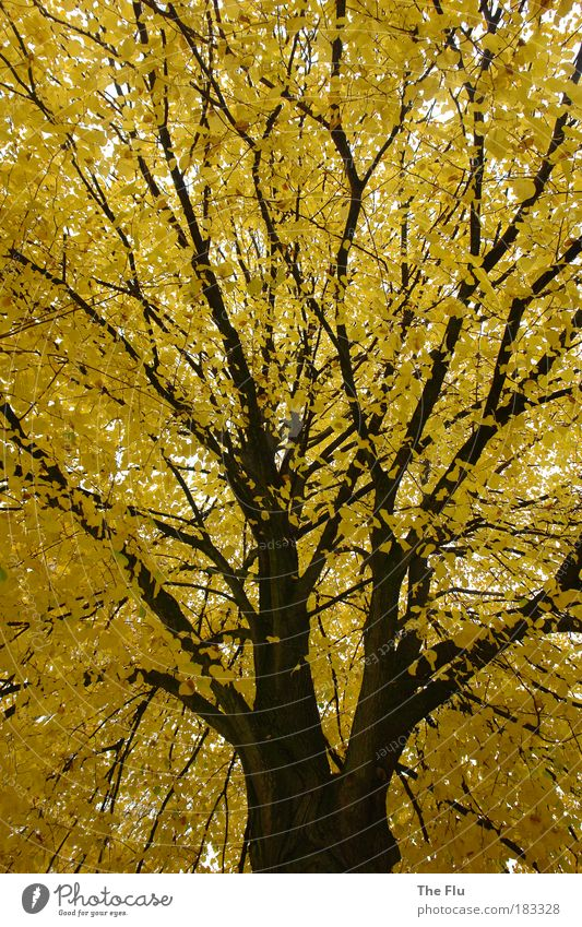 Nature Tree Plant Forest Yellow Autumn Emotions Dream Weather Brown Perspective Longing Outskirts