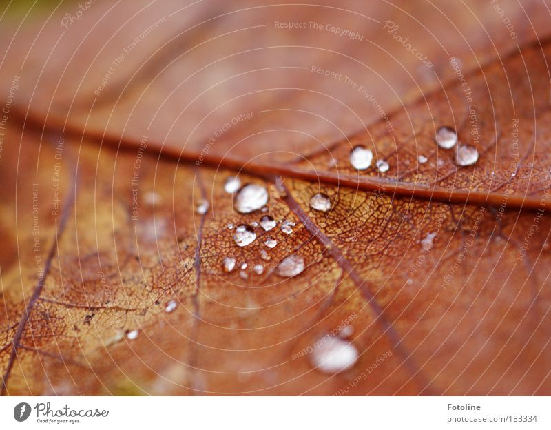 Nature Water Tree Red Plant Leaf Environment Autumn Park Brown Rain Weather Violet Autumn leaves Morning Limp