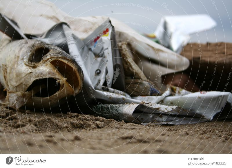 Nature Old Water Ocean Beach Animal Environment Death Coast Sand Food Dirty Nutrition Fish Depth of field Fish