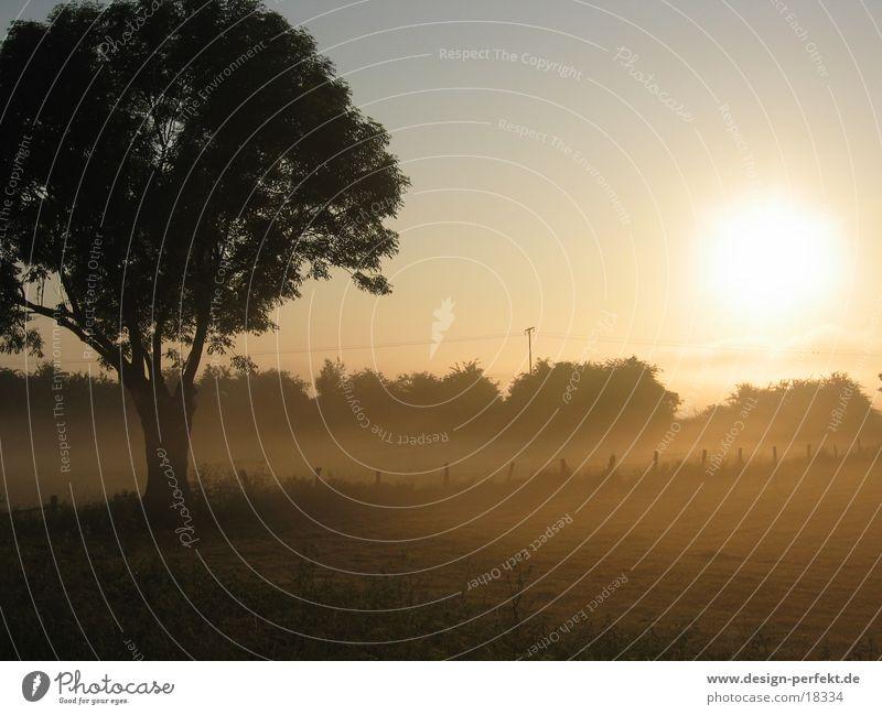 In the morning Fog Morning Sunrise Field Dawn March