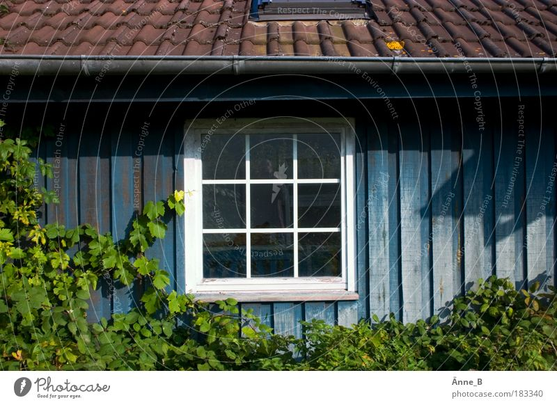 Green Blue White Leaf House (Residential Structure) Window Wood Garden Brown Contentment Flat (apartment) Facade Living or residing Uniqueness Roof