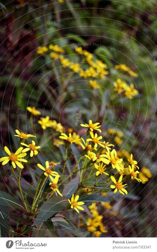 Nature Sun Flower Green Plant Calm Yellow Forest Blossom Mountain Spring Environment Exotic Australia Harmonious Foliage plant