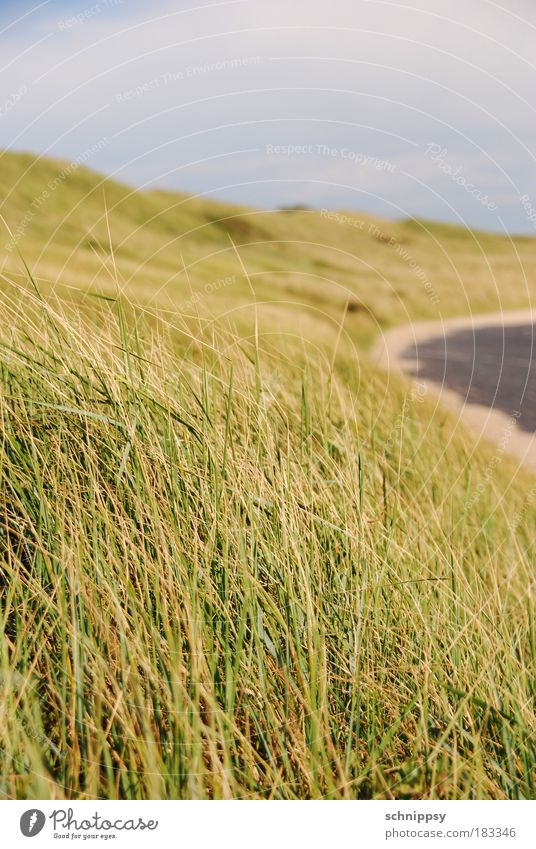 coastal strip Colour photo Exterior shot Deserted Day Worm's-eye view Nature Landscape Wind Grass Bushes Meadow Hill Coast North Sea Natural Green