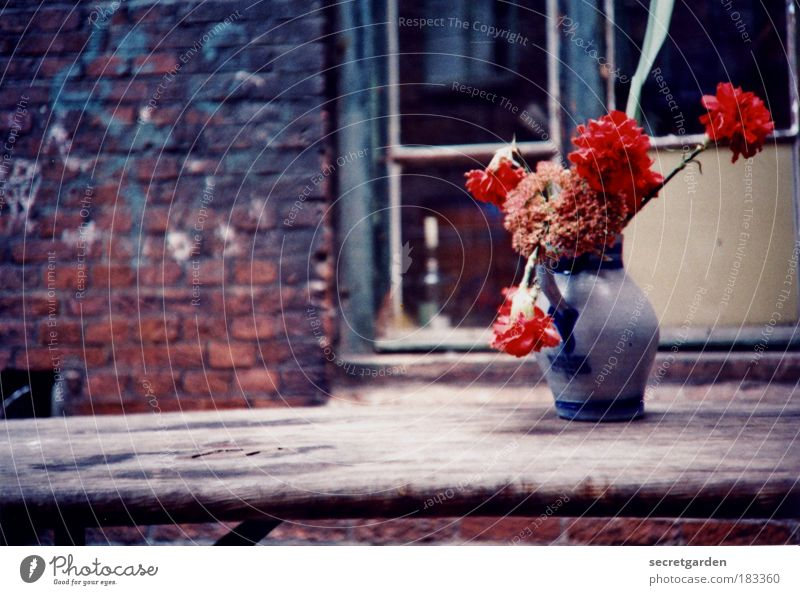 Blue Summer Flower Red Window Wall (building) Sadness Blossom Wall (barrier) Wood Living or residing Decoration Birthday Empty Table Poverty