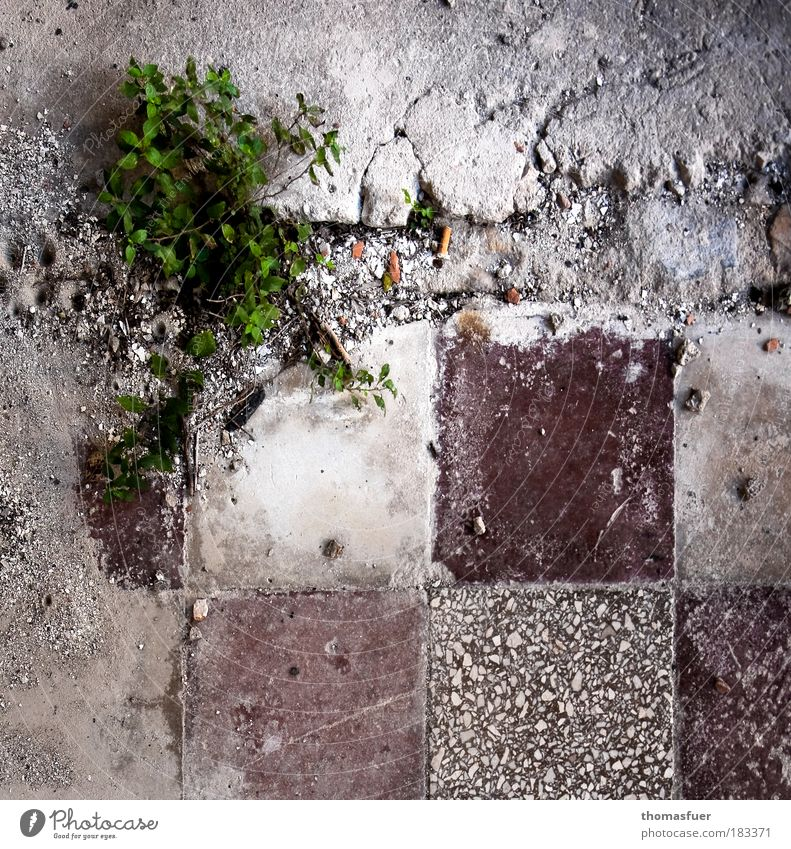 Nature Old Green Plant Stone Sadness Brown Dirty Flat (apartment) Concrete Perspective Growth Bathroom Kitchen Broken Floor covering