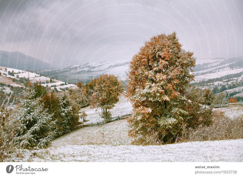 First snow in autumn. Snowfall in mountains Sky Nature Vacation & Travel Green White Tree Landscape Red Clouds Far-off places Winter Forest Mountain Environment Yellow Autumn