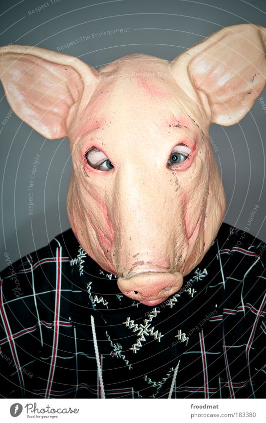 Human being Animal Masculine Modern Portrait photograph Crazy Curiosity Mysterious Carnival Creepy Whimsical Bizarre Surrealism Anonymous False Pigs