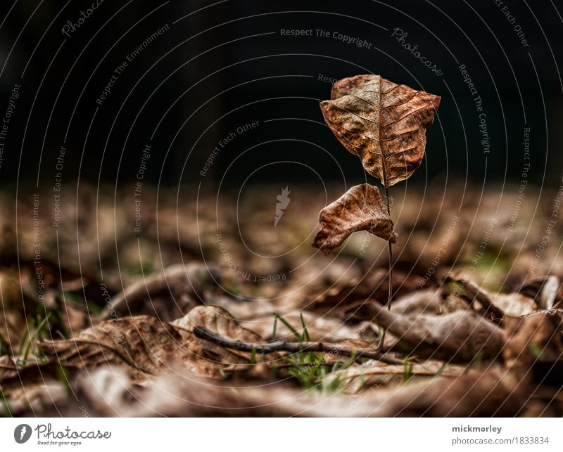 Lonely autumn tree in a sea of leaves Expedition Environment Nature Landscape Autumn Climate Climate change Warmth Drought Tree Leaf Exotic Park Meadow Old