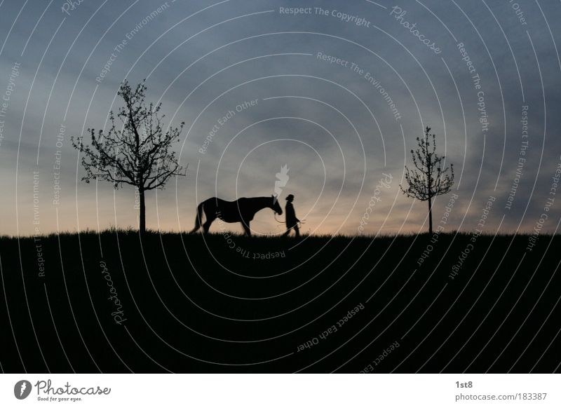 tree, horse, woman, tree Colour photo Exterior shot Deserted Copy Space top Copy Space bottom Neutral Background Evening Twilight Silhouette Back-light Ride