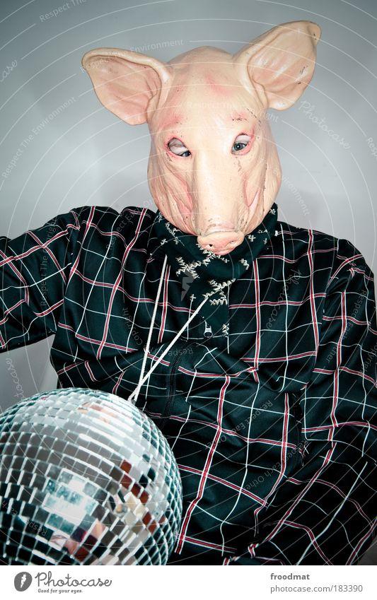 popstar swine flu Colour photo Multicoloured Interior shot Studio shot Flash photo Animal portrait Upper body Front view Looking into the camera Farm animal