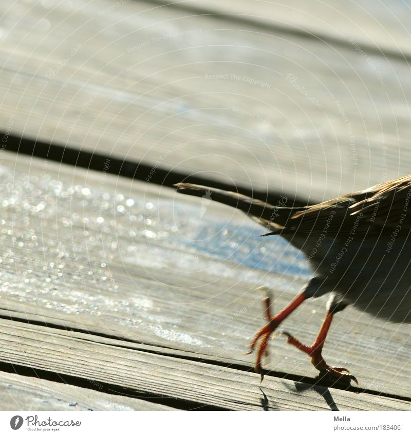Nature Animal Environment Life Wood Movement Small Jump Brown Bird Fear Walking Speed Floor covering Terrace Wooden floor