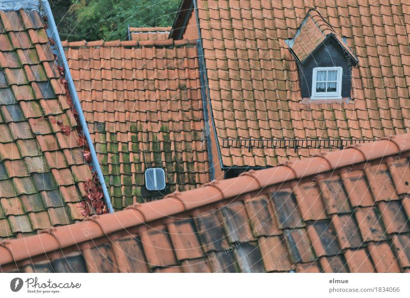 Roofscape (1) Small Town House (Residential Structure) Roof ridge Roofing tile Skylight Old Authentic Exceptional Historic Red Contentment Safety (feeling of)