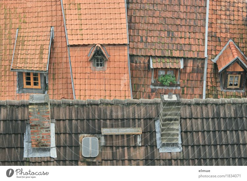 Roofscape (2) House (Residential Structure) Old town Apartment Building Tiled roof Roofing tile Roof ridge Skylight Oriel window Window Hatch Chimney Historic