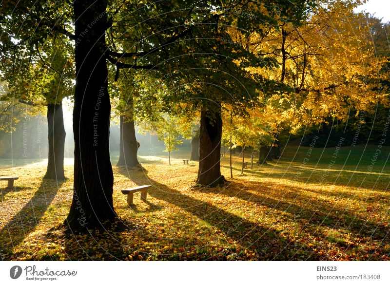 Nature Tree Plant Yellow Morning Autumn Depth of field Weather Back-light Park Landscape Brown Deserted Shadow Environment Authentic