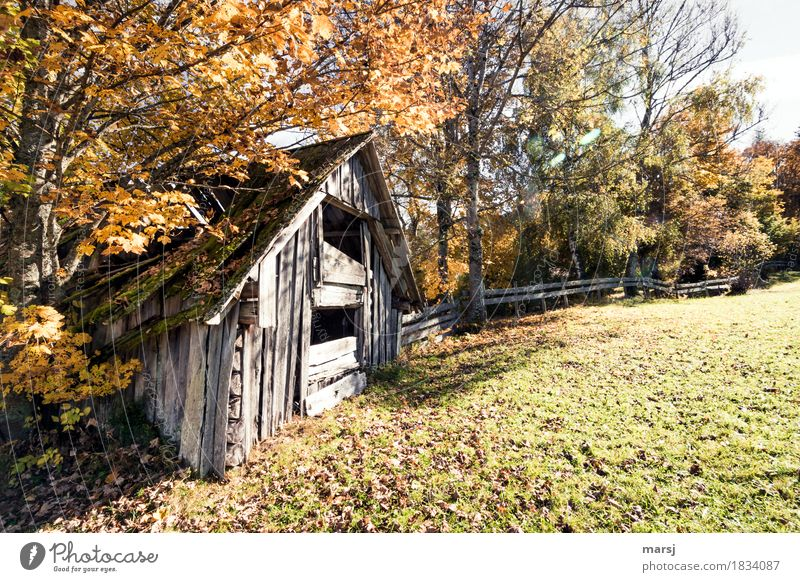 Autumnal decay Hut haystack Nature Beautiful weather Tree Old Decline Transience Change Destruction Idyll Derelict course of time Hayrick Autumnal colours