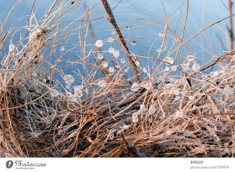 Nature Blue Winter Environment Brown Ice Drops of water Network Frost Water Style Mysterious Connection Perspective Idea River bank