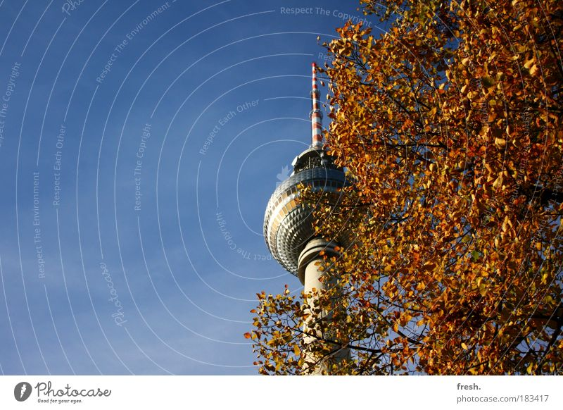 Beautiful Autumn Berlin Exceptional Beautiful weather Downtown Berlin Tourist Attraction Capital city Berlin TV Tower Blue sky Autumnal Original