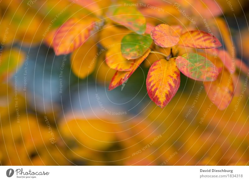 autumn day Nature Landscape Plant Animal Autumn Beautiful weather Tree Bushes Leaf Garden Park Forest Yellow Orange Red Autumnal Autumn leaves Autumnal colours