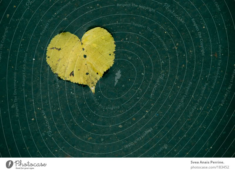 Nature Water Blue Leaf Love Loneliness Yellow Colour photo Exterior shot Rain Environment Heart Dirty Grief Drop Broken