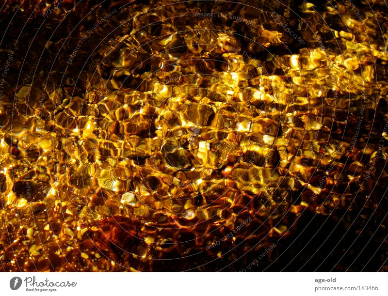 gold rush Harmonious Relaxation Environment Nature Elements Water Sunlight Summer Beautiful weather Brook Stone Glittering Illuminate Dream Esthetic Fluid Wet