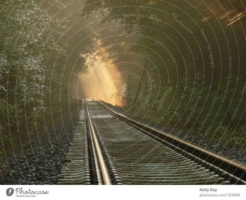 Light at the end of the track Landscape Air Sunlight Summer Weather Fog Tree Forest Transport Traffic infrastructure Train travel Rail transport Railroad