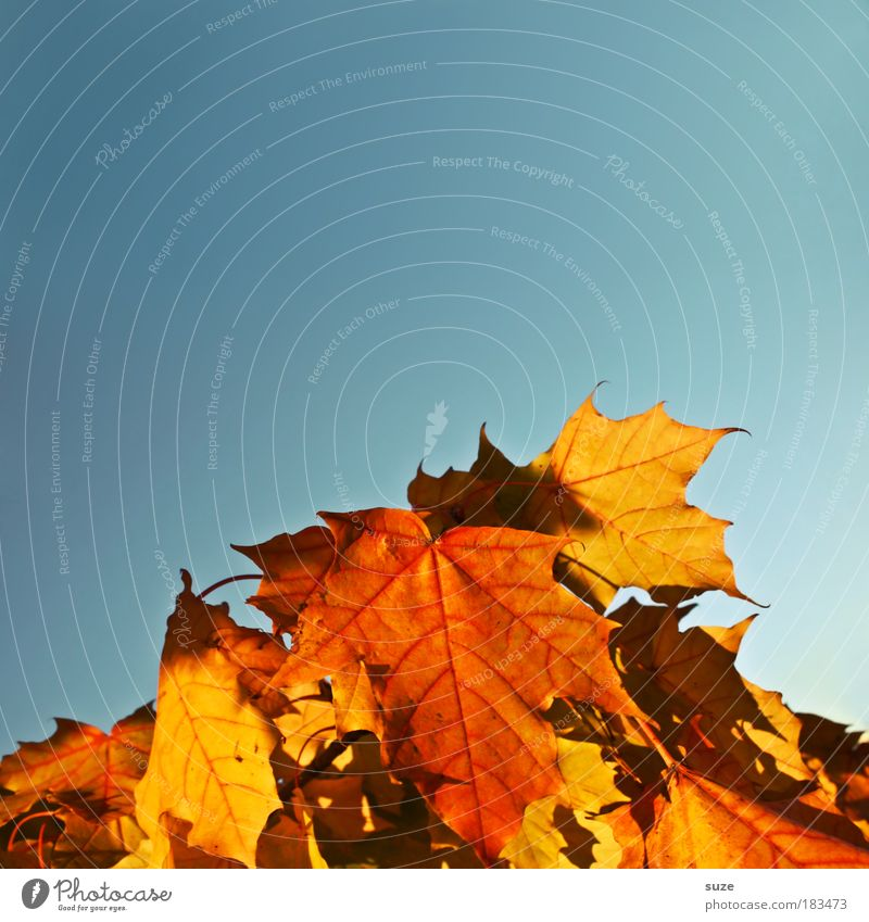Nature Beautiful Old Sky Plant Leaf Autumn Environment Weather Esthetic To fall Dry Collection Beautiful weather Blue sky